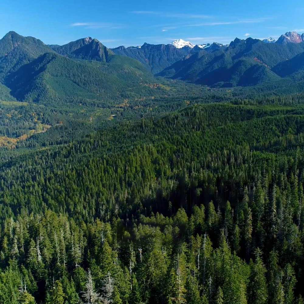 Warrior PATHH landscape in the Pacific Northwest