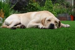 artificial-pet-grass