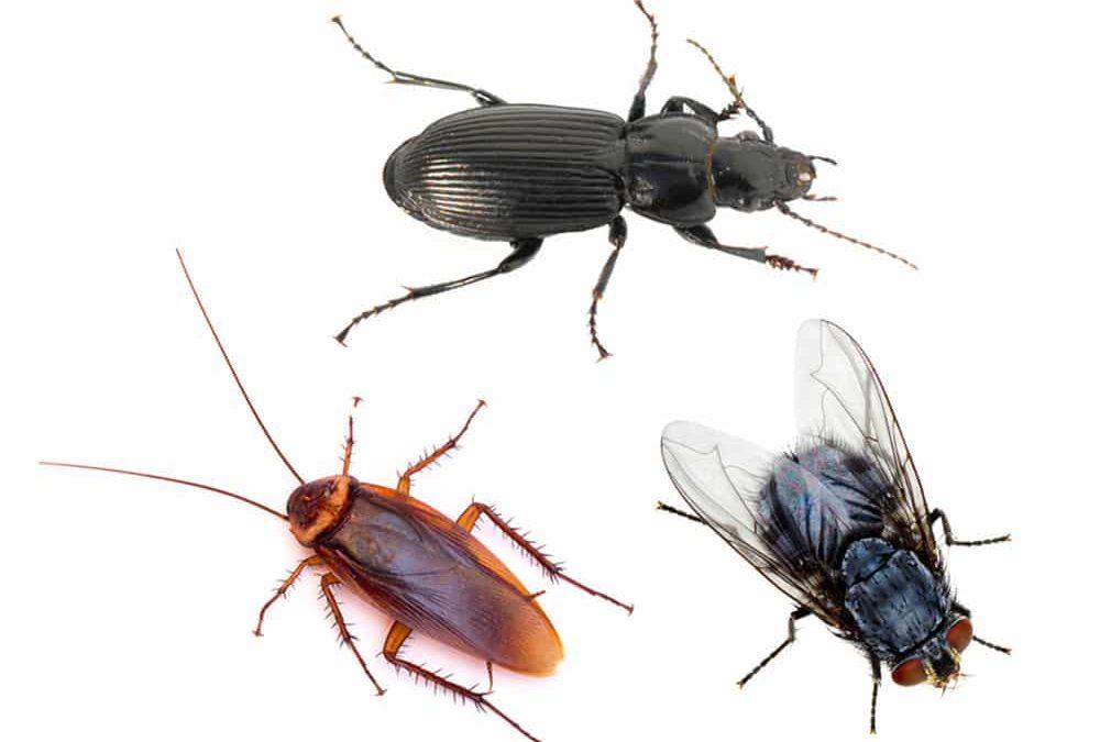Residential Pest Control in Ridgefield WA