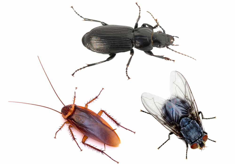 Carpenter Ant Pest Control in Portland OR and Vancouver WA