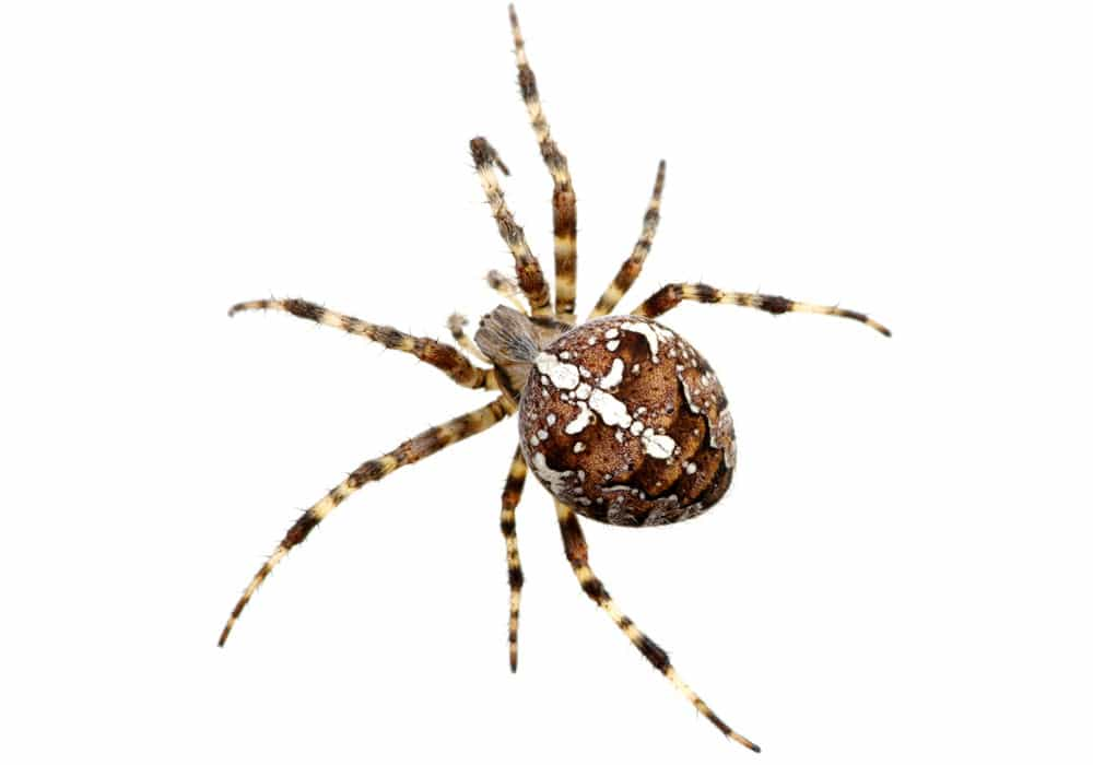 Spider Pest Control Vancouver WA