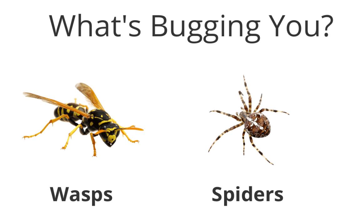 Pest Control in Battle Ground WA