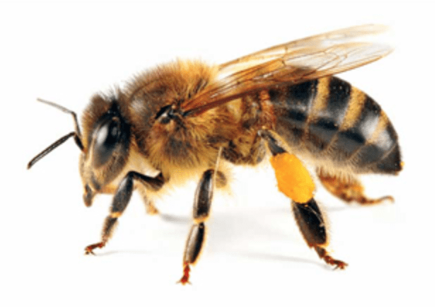 Bee Removal in Vancouver WA
