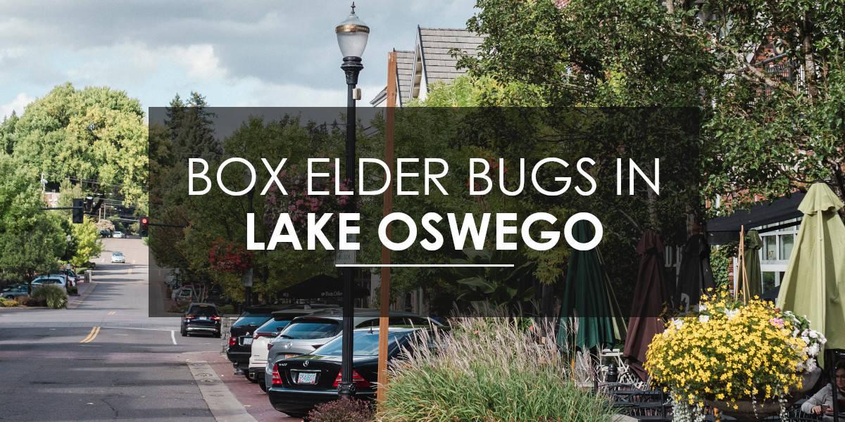 Box Elder Bug Control in Lake Oswego