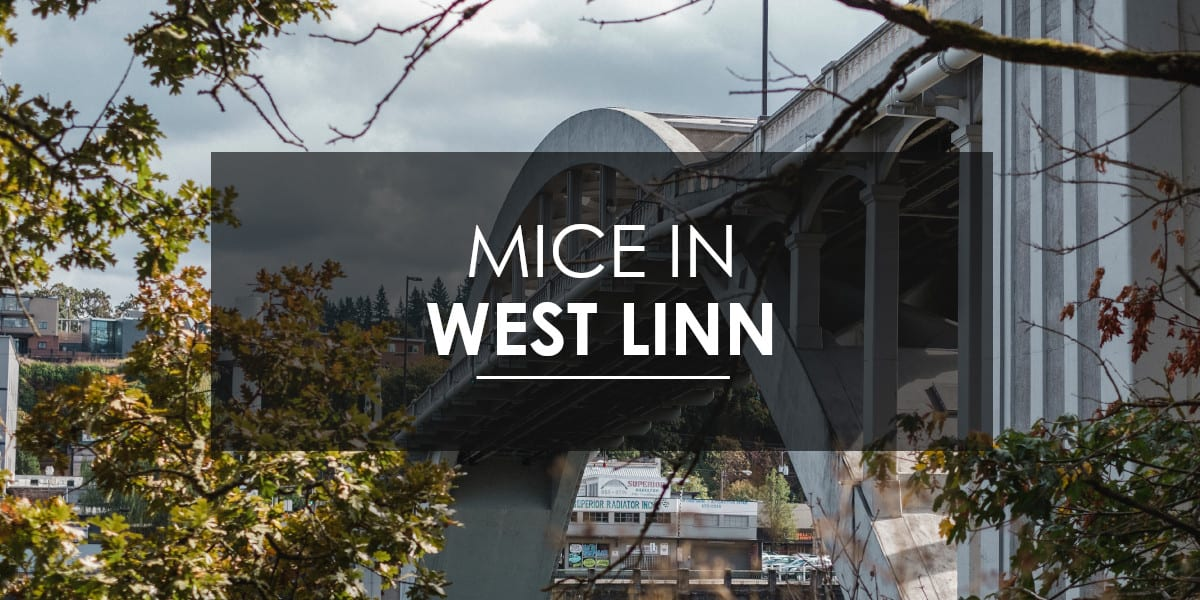 Mice control West Linn