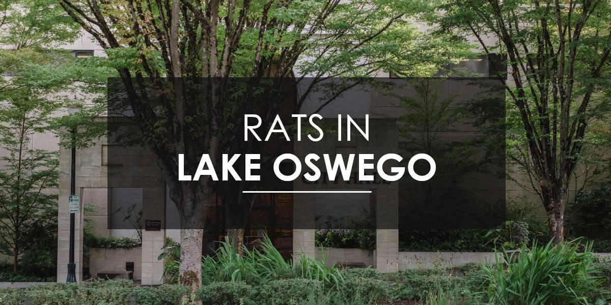 Rat control Lake Oswego
