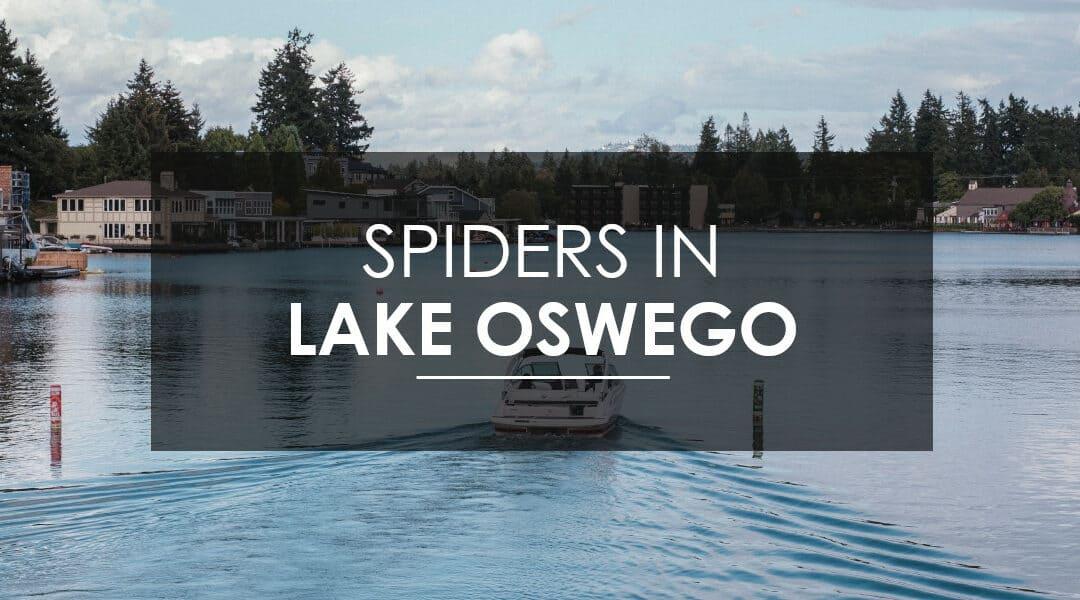 Spiders in Lake Oswego