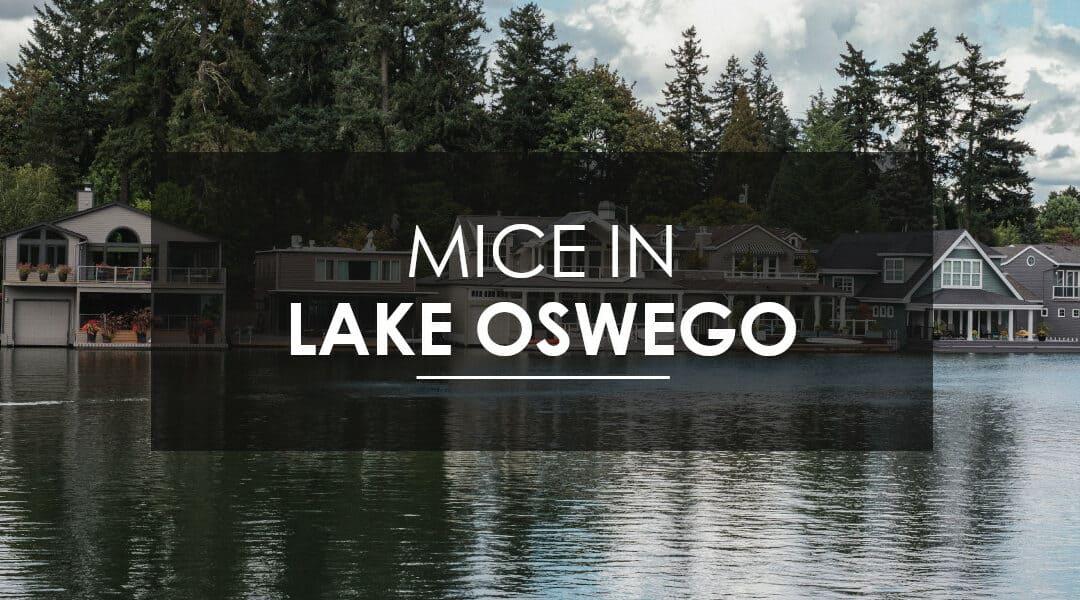 Mice Control In Lake Oswego