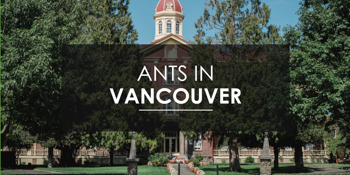 Ant Extermination in Vancouver