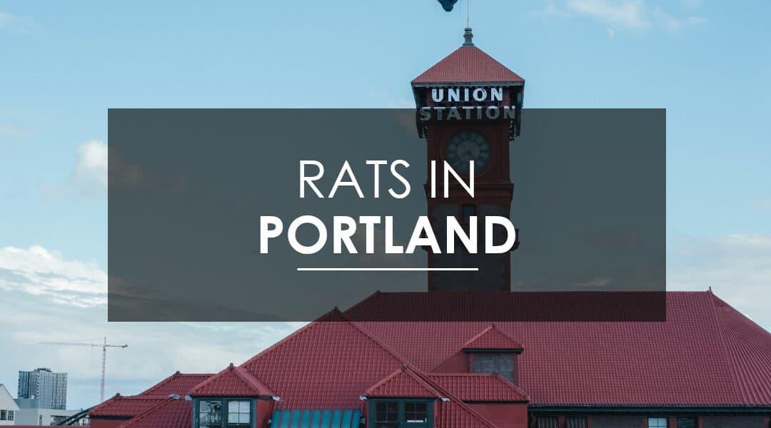 Rat Control in Portland