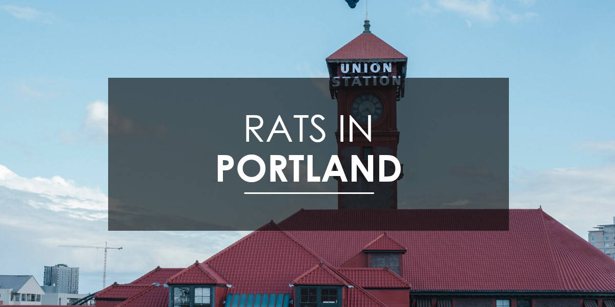 Who to call for rat and rodent control in Portland, OR