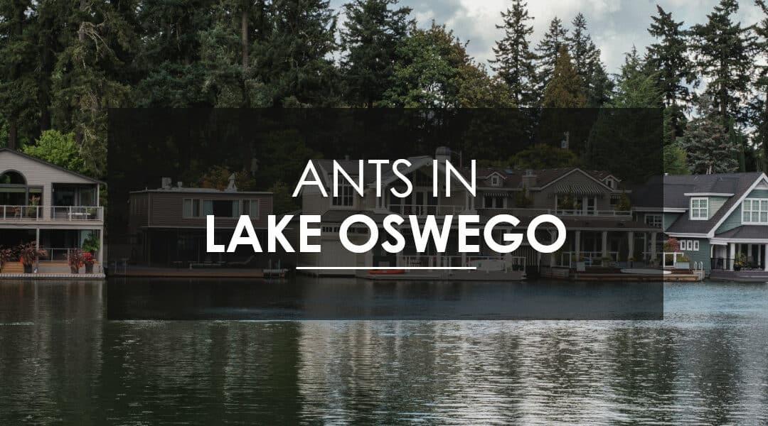 Ant Control in Lake Oswego