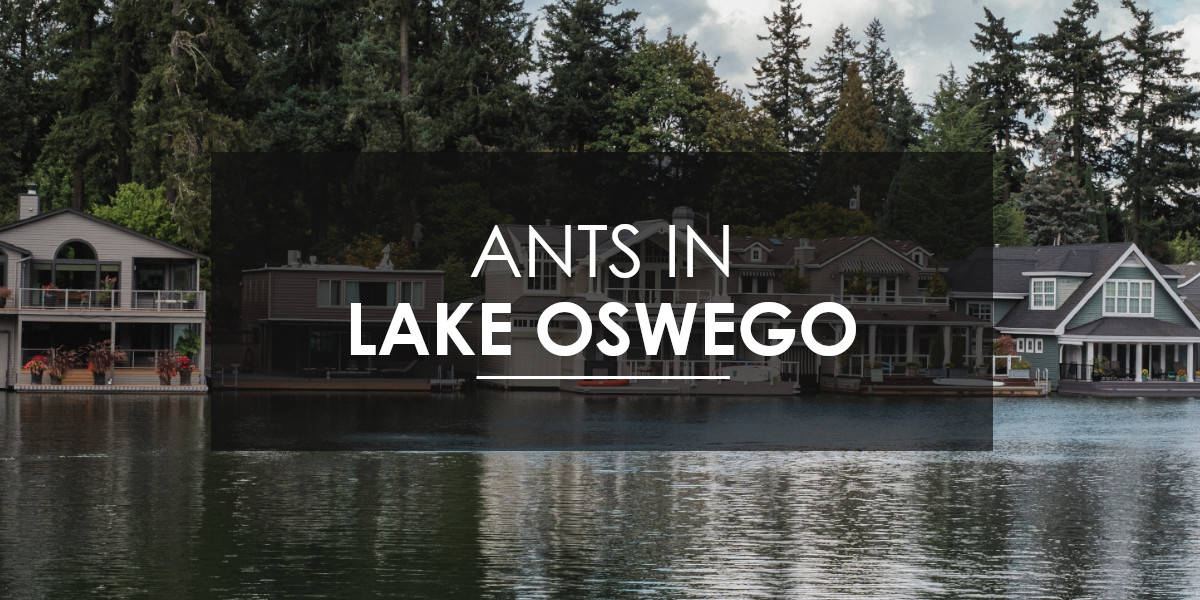 Aspen Pest Control provides ant control services in Lake Oswego