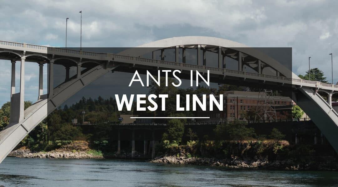 Ant Control in West Linn