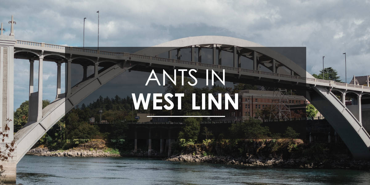 Aspen Pest Control provides ant extermination services in West Linn.