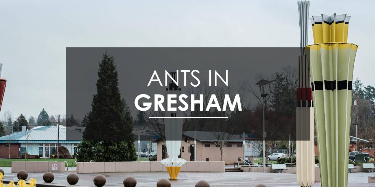 Ant control in Gresham, OR.