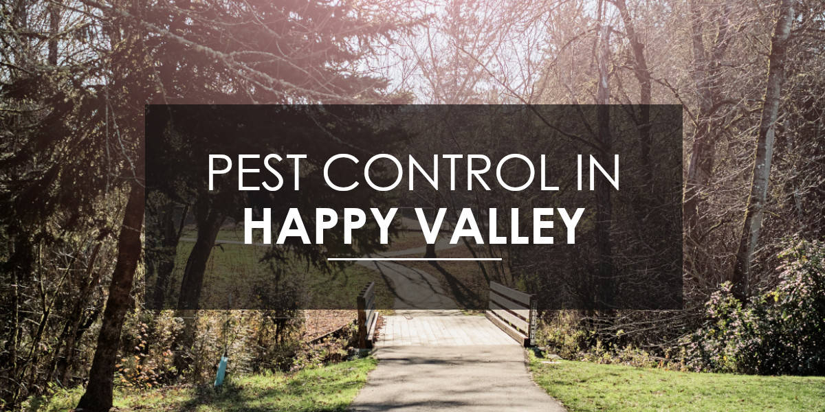 Pest Control in Happy Valley