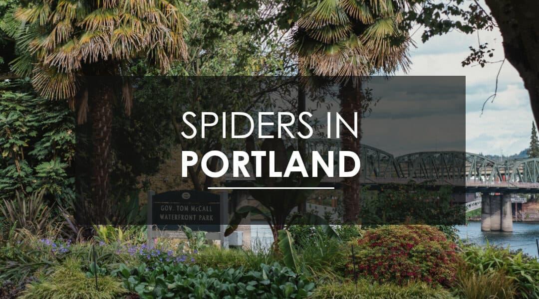 Spider Extermination in Portland, OR