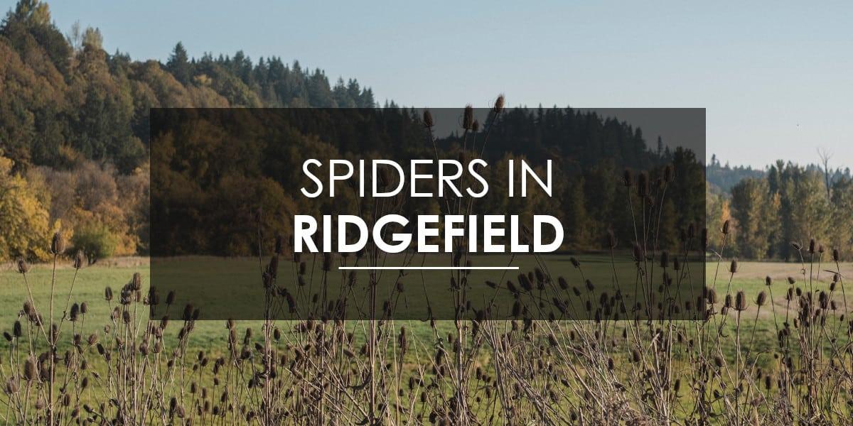 Spiders in Ridgefield