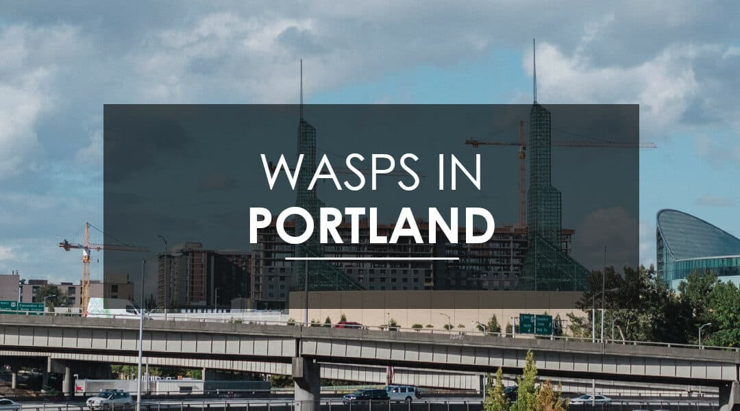 Stinging Insects In Portland