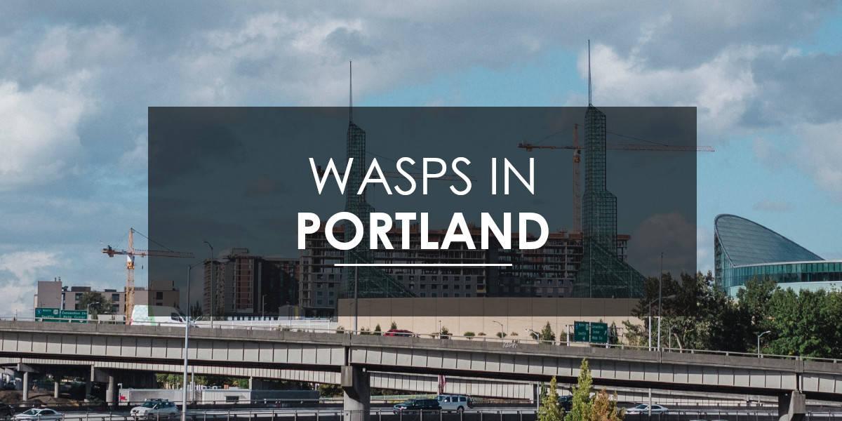 Wasps in Portland