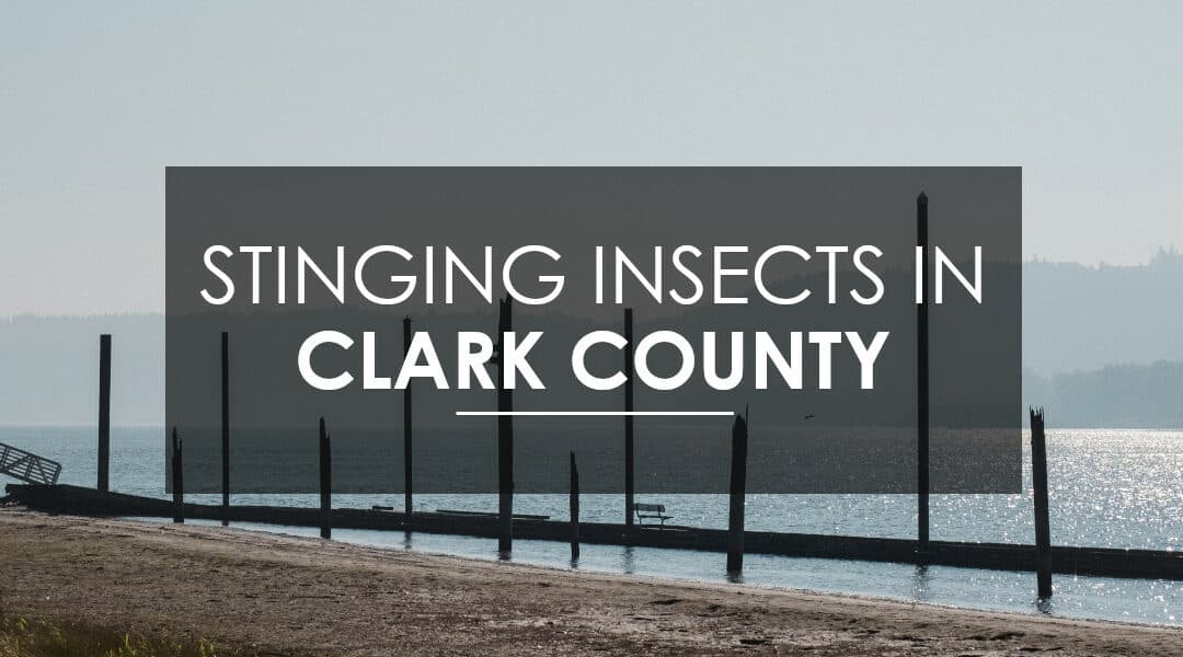 Wasps, Yellow Jackets, and Hornets in Clark County, WA