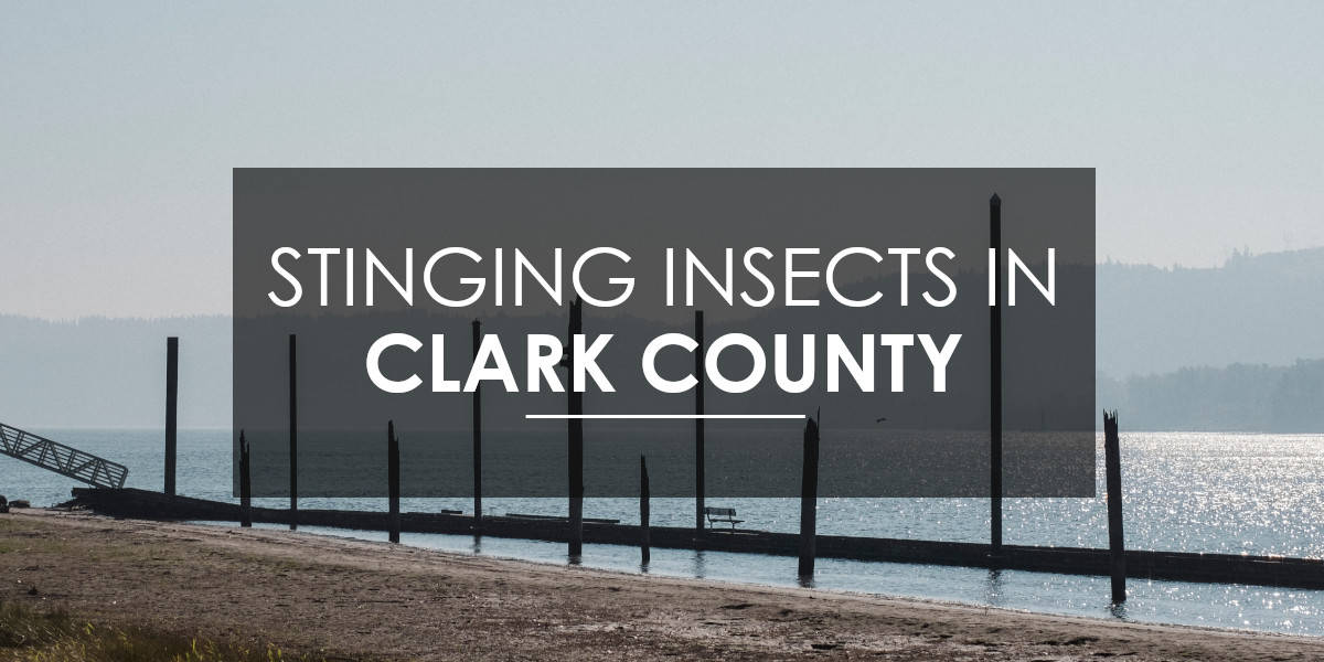 Stinging Insects in Clark County