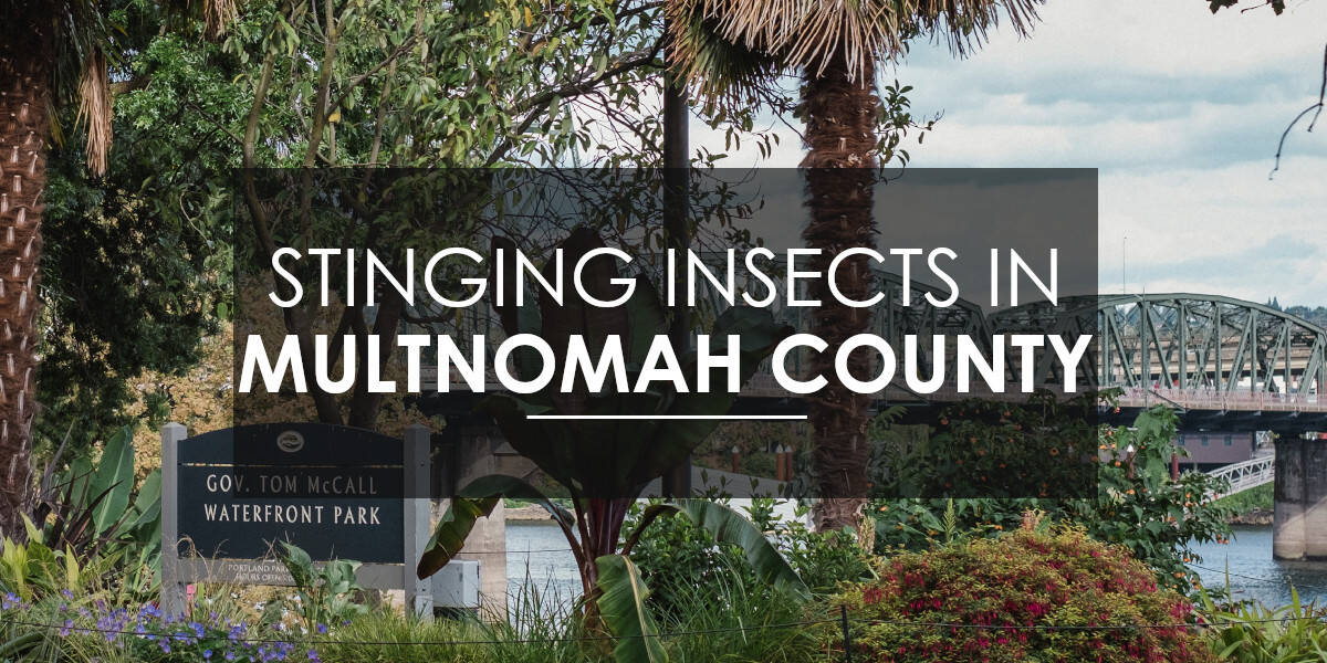 Stinging Insects in Multnomah County