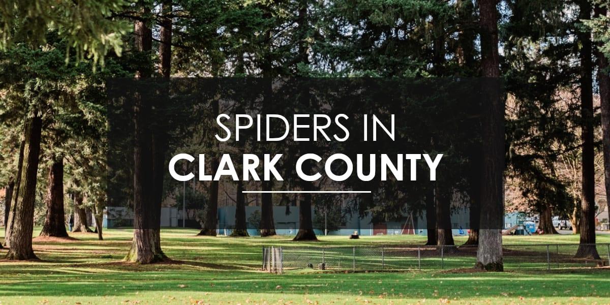 Spiders in Clark County