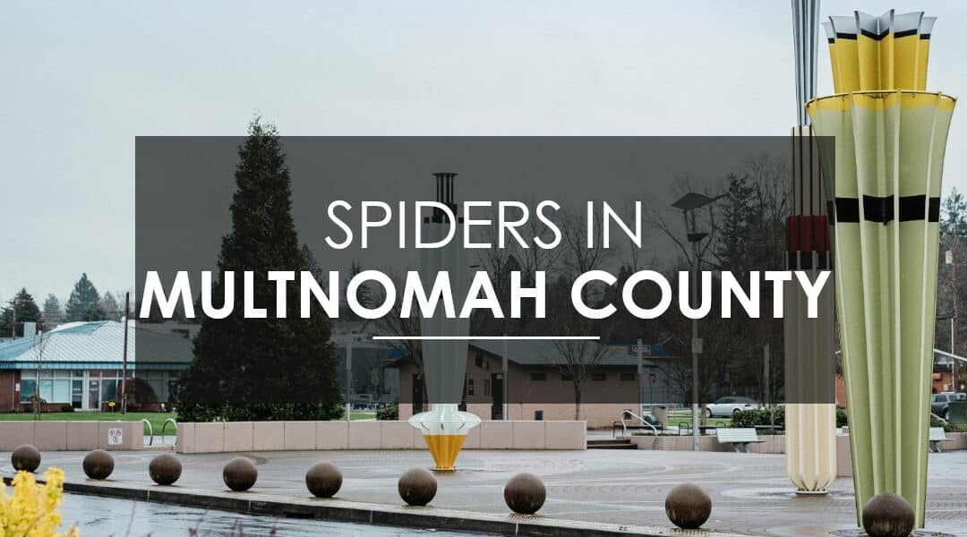Effective Kid- and Pet-Friendly Spider Control In Multnomah County