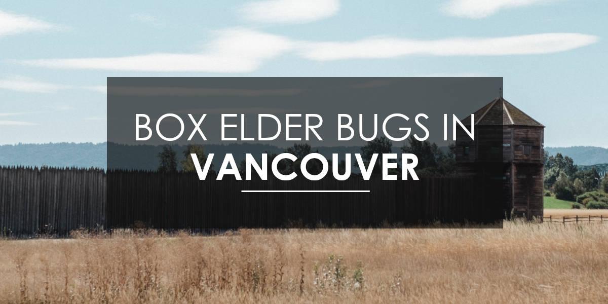 Box Elder in Vancouver