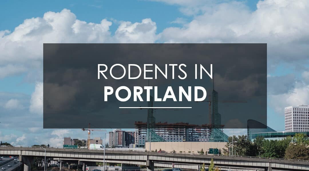 Mice and Rat Extermination  in Portland, OR