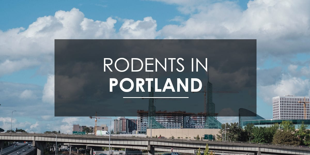 Rodents in Portland