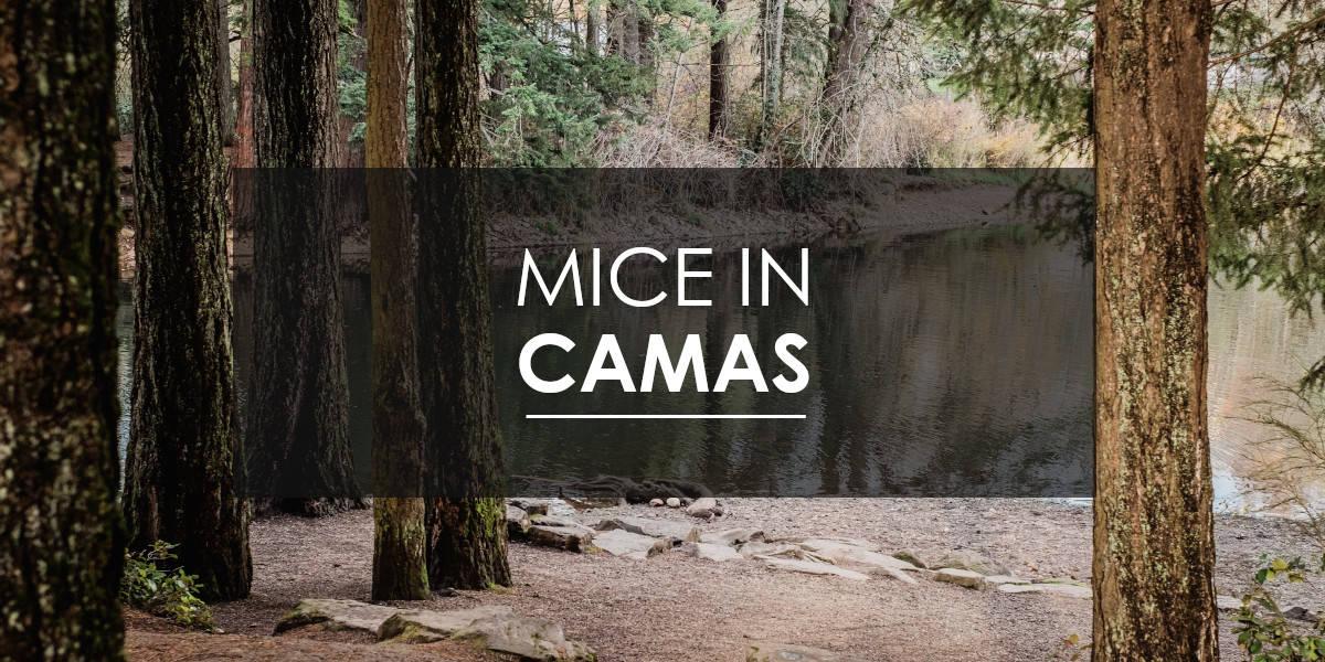 Mice in Camas