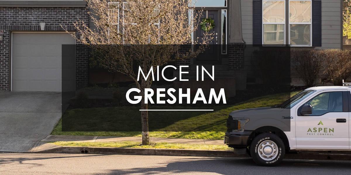 Mice in Gresham