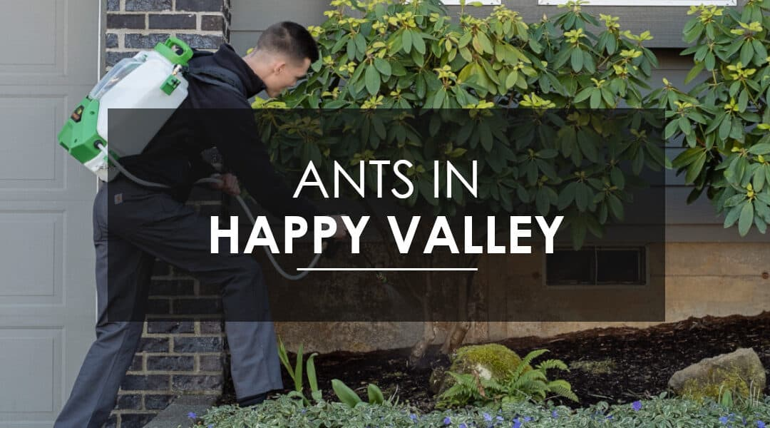 Sugar Ant Extermination  in Happy Valley