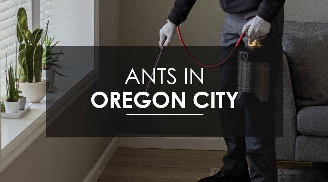Oregon City Sugar Ant Extermination