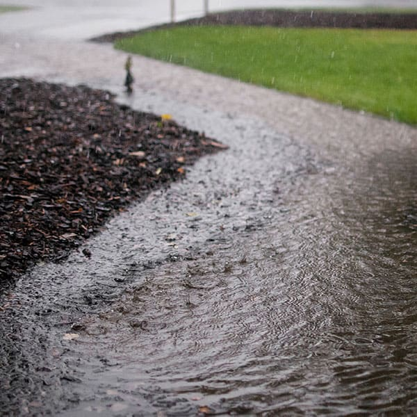 Standing water can create pest areas