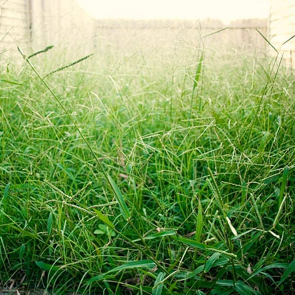 Pests like to live in overgrown vegetation or wood stored outdoors
