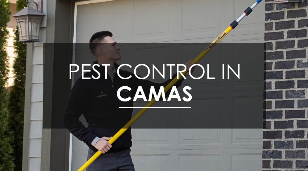 The Advantages of Year-Round Pest Control Services in Camas