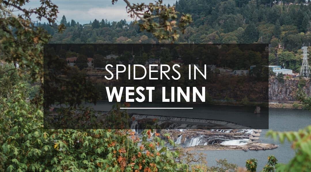 Spider Extermination In West Linn