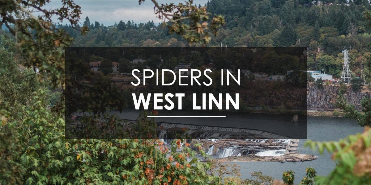 Spiders in West Linn