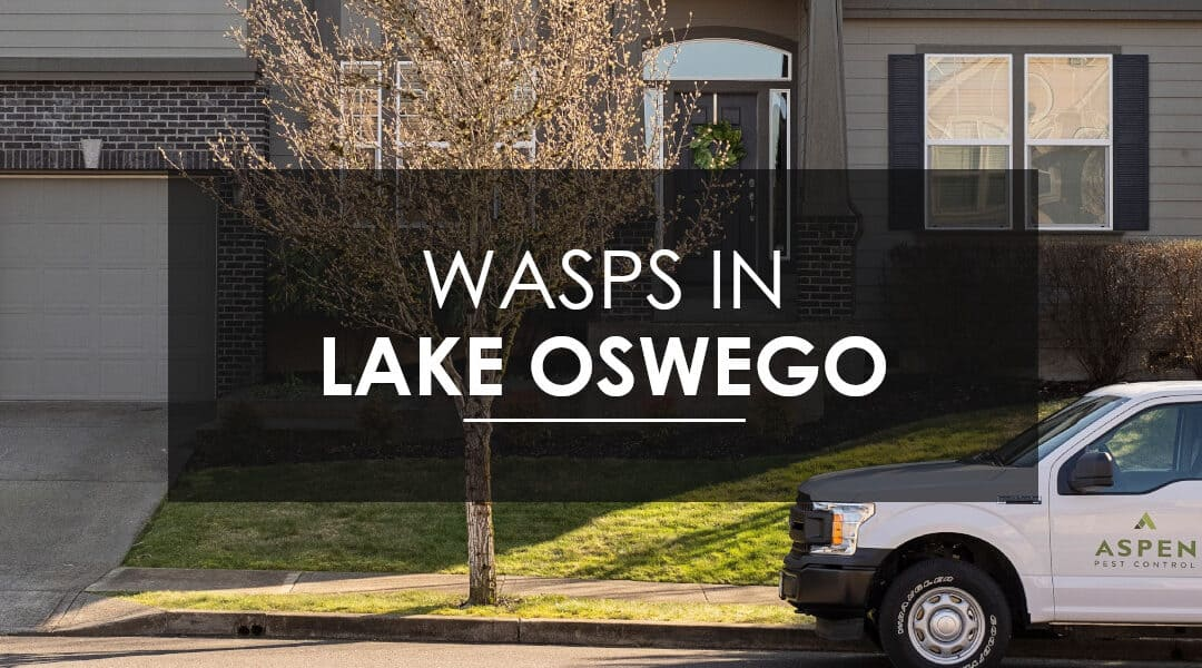 Aspen Pest Control: Wasps, Hornets, and Yellow Jackets in Lake Oswego