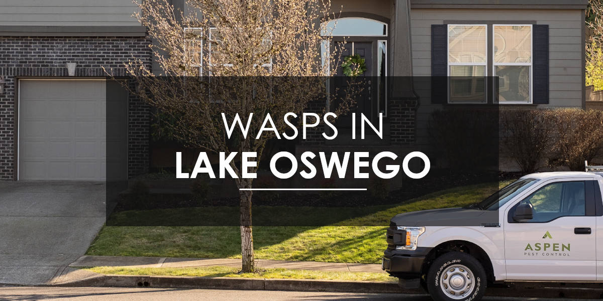 Wasps in Lake Oswego