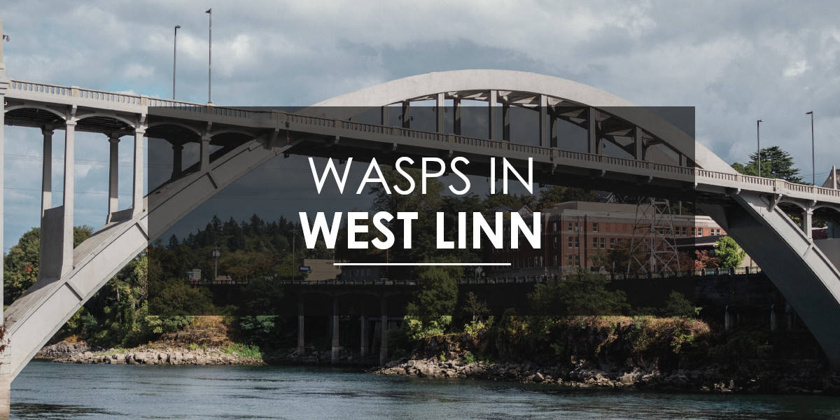 Wasps in West Linn