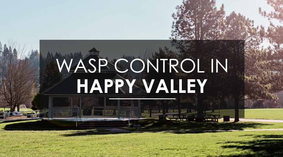 Wasp, Hornet, and Yellow Jacket Extermination in Happy Valley