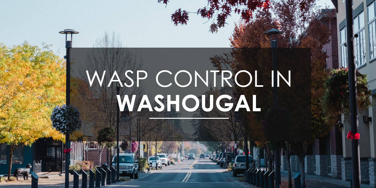 Wasps in Washougal