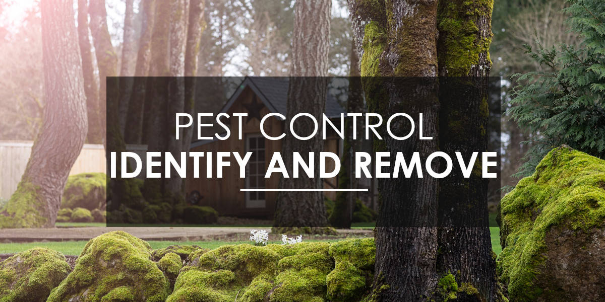 Identify and Remove Pests
