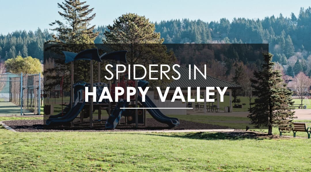 Spider Season in the Pacific Northwest: How to Keep your Happy Valley Home Free of Spiders
