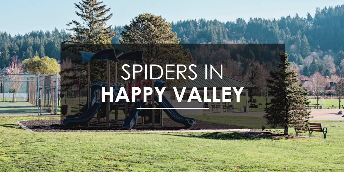 Spiders in Happy Valley